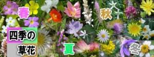FB四季の草花